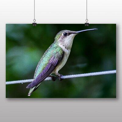 Big Box Art Hummingbird No.2 Photographic Print on Canvas