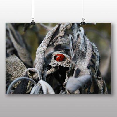 Big Box Art Ladybug Ladybird No.3 Photographic Print on Canvas