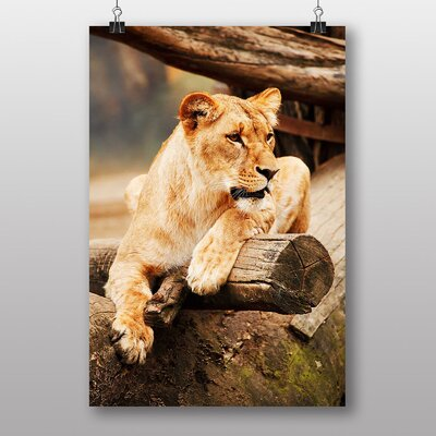 Big Box Art Lioness Lion Photographic Print