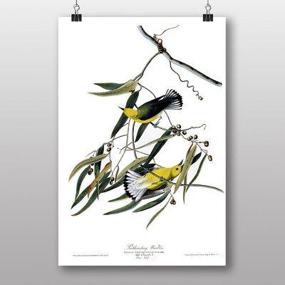 Big Box Art Prothonotary Warbler by John James Audubon Art Print