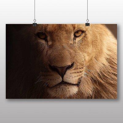Big Box Art Lion Photographic Print