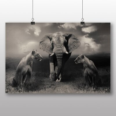 Big Box Art Lion Lionesses and an Elephant Photographic Print Wrapped on Canvas