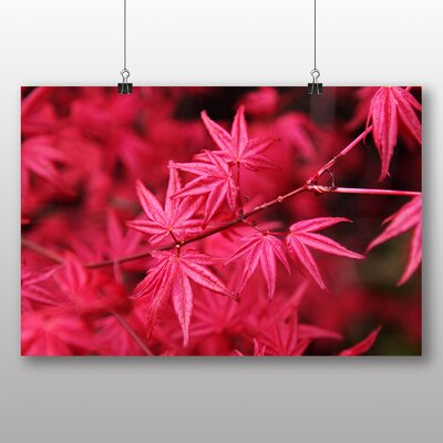 Big Box Art Japanese Maple Pink Photographic Print on Canvas