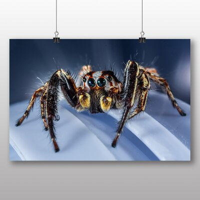Big Box Art Jumping Spider No.2 Photographic Print on Canvas