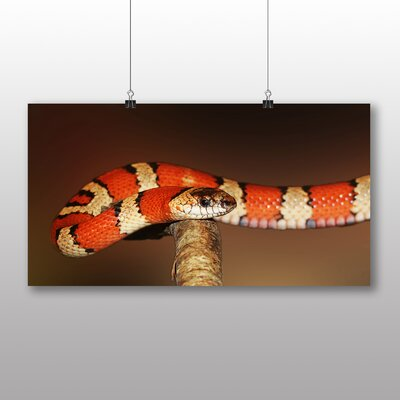 Big Box Art King Snake Photographic Print