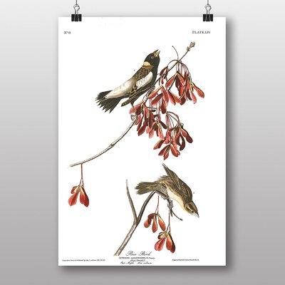 "Big Box Art ""Rice Bird"" by John James Audubon Graphic Art"