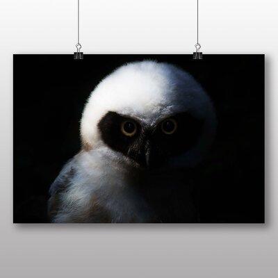 Big Box Art Owl No.2 Photographic Print