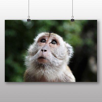 Big Box Art Monkey Photographic Print Wrapped on Canvas