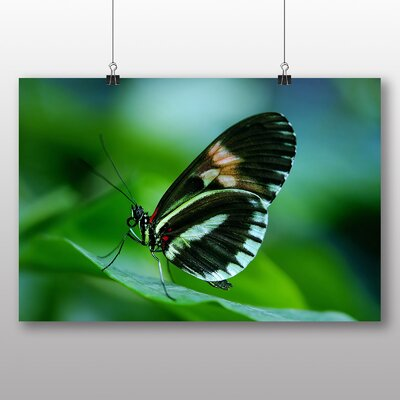 Big Box Art Papilio Butterfly Photographic Print