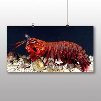 Big Box Art Mantis Shrimp Photographic Print Wrapped on Canvas
