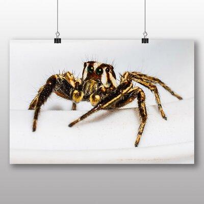 Big Box Art Jumping Spider No.4 Photographic Print