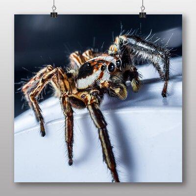 Big Box Art Jumping Spider No.3 Photographic Print
