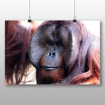 Big Box Art Orangutan Monkey No.2 Photographic Print on Canvas