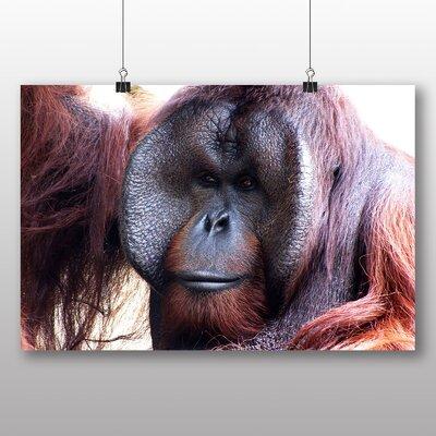 Big Box Art Orangutan Monkey No.2 Photographic Print