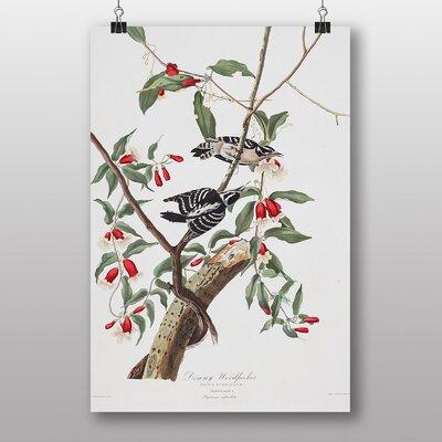 Big Box Art Downy Woodpecker by John James Audubon Art Print
