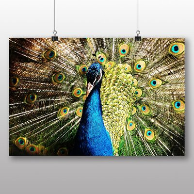 Big Box Art Peacock Bird No.2 Photographic Print