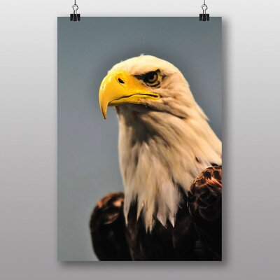 Big Box Art North American Bald Eagle Bird Photographic Print Wrapped on Canvas