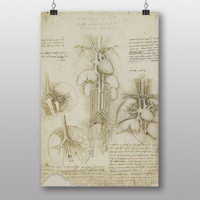 Big Box Art Leonardo Da Vinci Anatomy No.5 Graphic Art