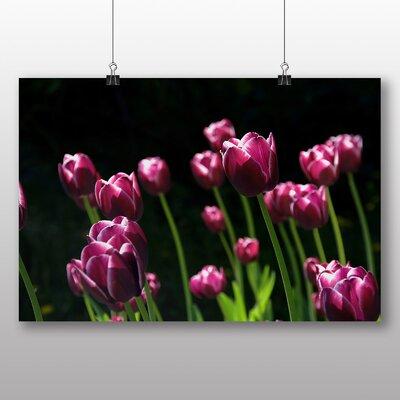 Big Box Art Pink Purple Tulip Flower No.2 Photographic Print Wrapped on Canvas