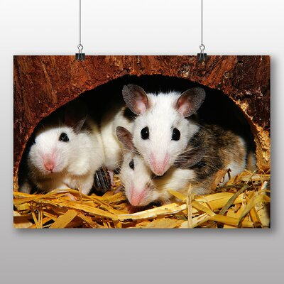 Big Box Art Mouse Hole Photographic Print on Canvas