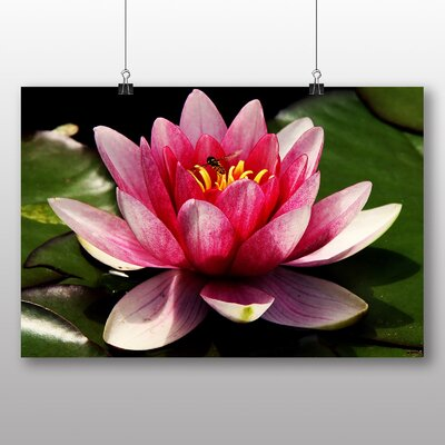 Big Box Art Pink Water Lily Flower No.4 Photographic Print