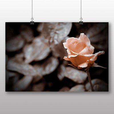 Big Box Art Pink Rose Flower No.7 Photographic Print on Canvas