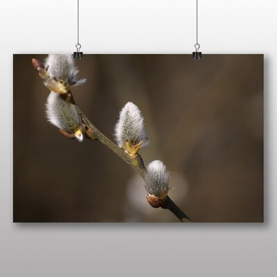 Big Box Art Pussy Willow Tree Photographic Print