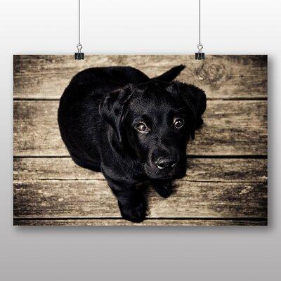 Big Box Art Puppy Dog Photographic Print