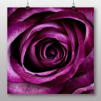 Big Box Art Purple Rose Flower No.2 Graphic Art