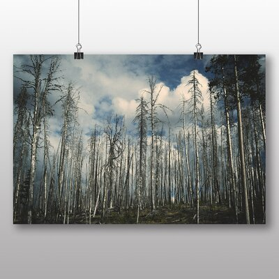 Big Box Art Quiet Forest Photographic Print Wrapped on Canvas