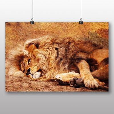 Big Box Art Resting Lion Photographic Print
