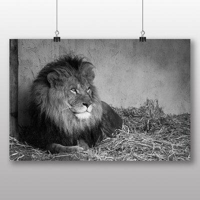 Big Box Art 'Resting Lion Black and White' Photographic Print