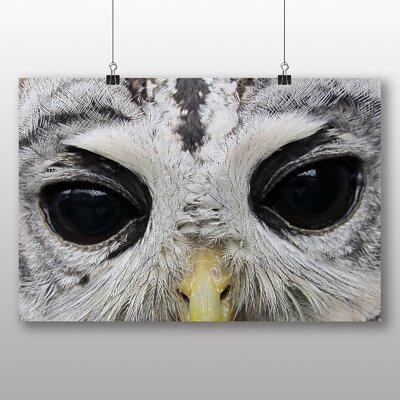 Big Box Art Owl Eyes Photographic Print