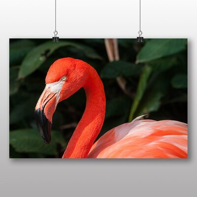 Big Box Art Flamingo No.2 Photographic Print