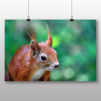 Big Box Art Squirrel Photographic Print