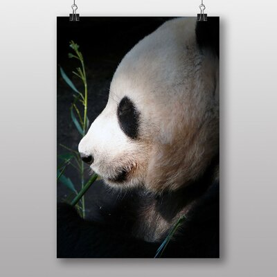 Big Box Art Panda No.2 Photographic Print Wrapped on Canvas
