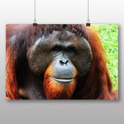 Big Box Art Orangutan Monkey Photographic Print
