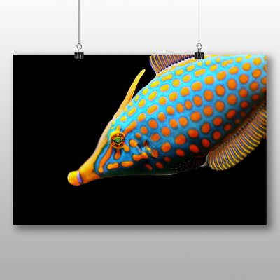 Big Box Art Meeresbehoner Fish Graphic Art Wrapped on Canvas