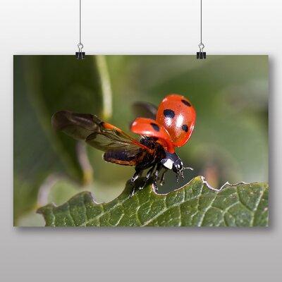 Big Box Art 'Ladybird Taking Flight' Photographic Print