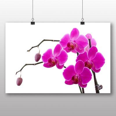 Big Box Art Purple Orchid Flower No.4 Photographic Print