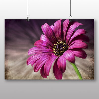 Big Box Art Pink Daisy Flower No.1 Photographic Print Wrapped on Canvas