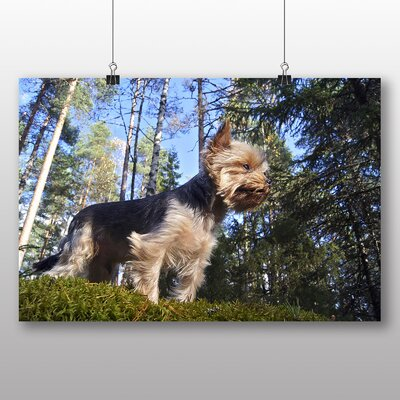Big Box Art Yorkshire Terrier Dog Forest Photographic Print
