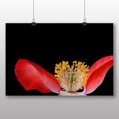Big Box Art Poppy Flower No.1 Photographic Print Wrapped on Canvas