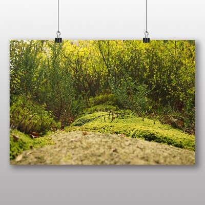 Big Box Art 'The Green Forest No.1' Photographic Print