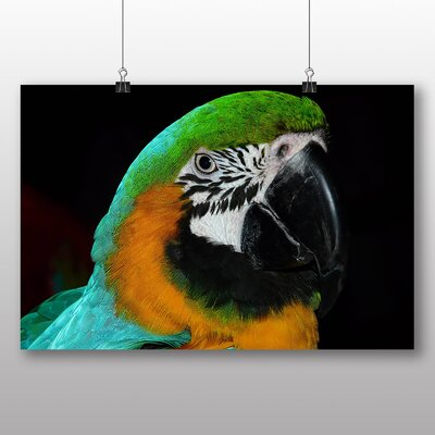 Big Box Art Parrot Photographic Print Wrapped on Canvas