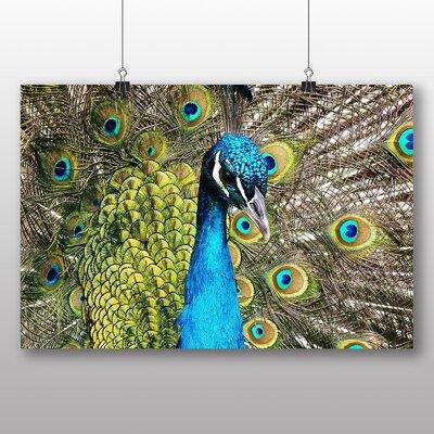 Big Box Art Peacock Bird Photographic Print