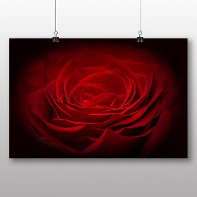 Big Box Art Rose Flower No.8 Graphic Art