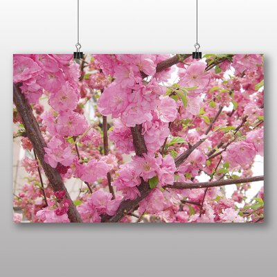 Big Box Art Prunus Persica Flower Photographic Print