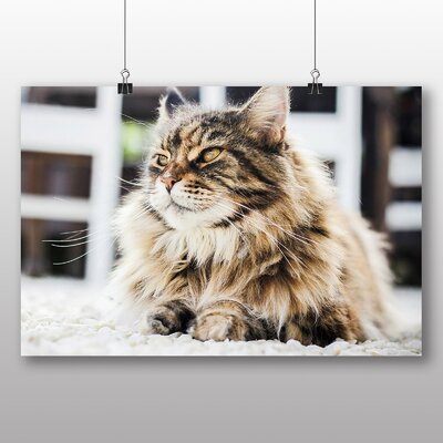 Big Box Art Persian Cat Photographic Print