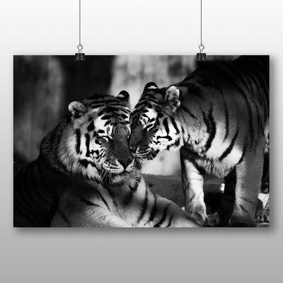 Big Box Art Tigers No.6 Photographic Print